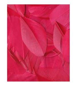 Plumas fantasía color fucsia - 13030029